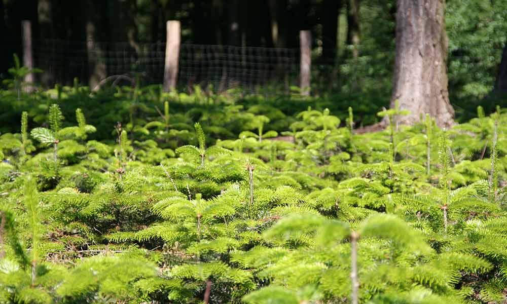 tannenbaumverkauf_05.jpg